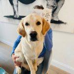 Internationaler Bürohundtag 2021: Hunde-Grüße, die den Management-Blog erreichten